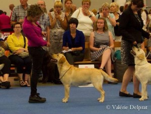 World Dog Show Helsinki 2014