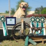TOP LABRADOR 2017 OF  ITALY